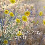 Desert Marigolds