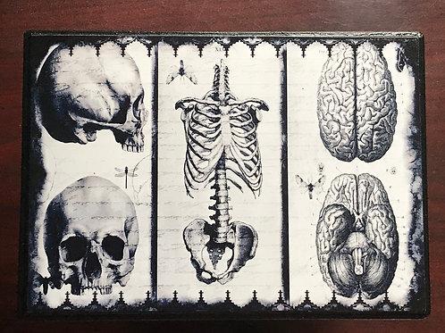 Anatomize Hangable Plaque