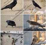 Bird Photo Sampler
