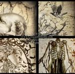 Vintage Anatomy Series Preview