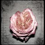 Love's Memory