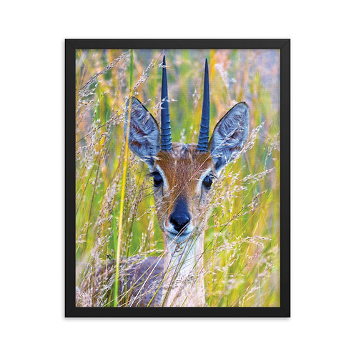 Delicate Innocence - Framed photo paper poster