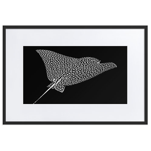 Ray in the dark - Matte Paper Framed Poster With Mat