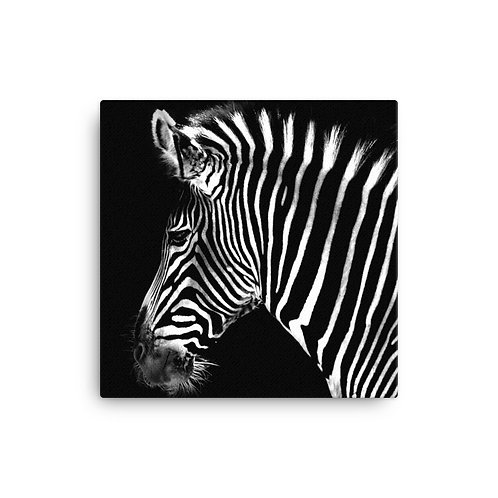 Mr. Whiskers Zebra Canvas
