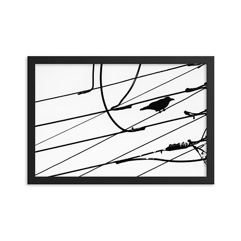 On The Wire- Framed photo paper poster