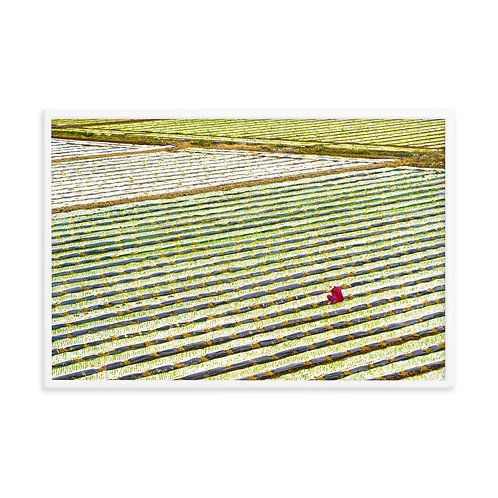 The Onion Tender - Framed photo paper poster