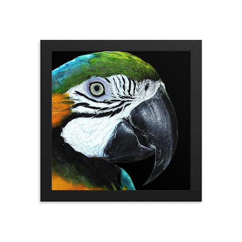 Polly - Framed photo paper poster