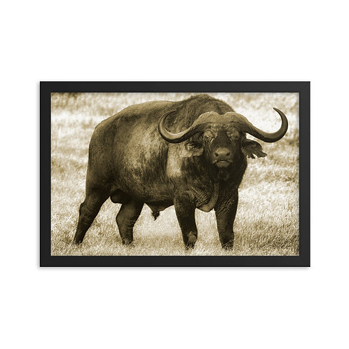 Taurus - Framed photo paper poster