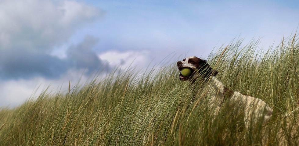 Dorset Dogs