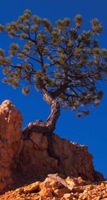 Roots on Rocks