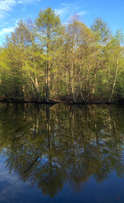 Teal Pand Reflection