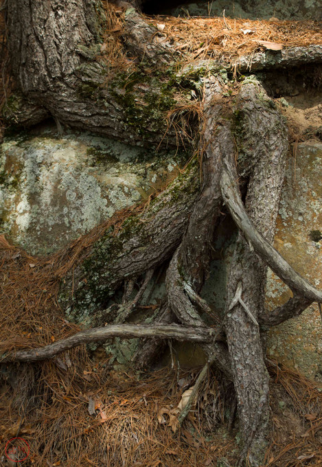 Roots on Rocks #7
