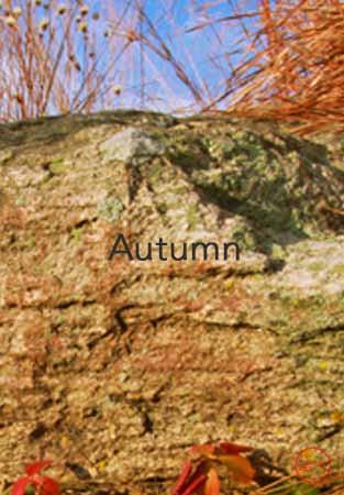 Fall Cover.jpg