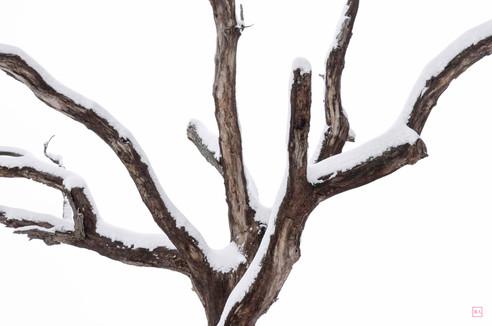 Winter Coat (Jackson Oak)