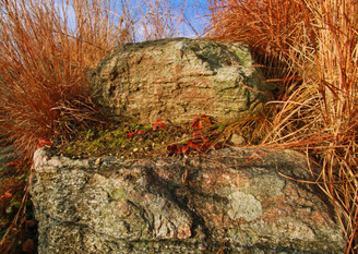 Ancient Fall Colors