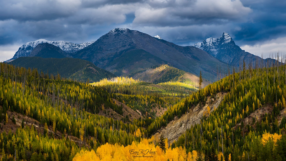 Fall Colors in Glacier