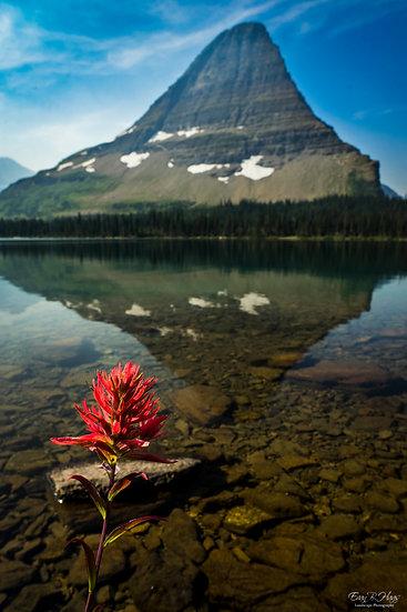 Hidden Lake Flower