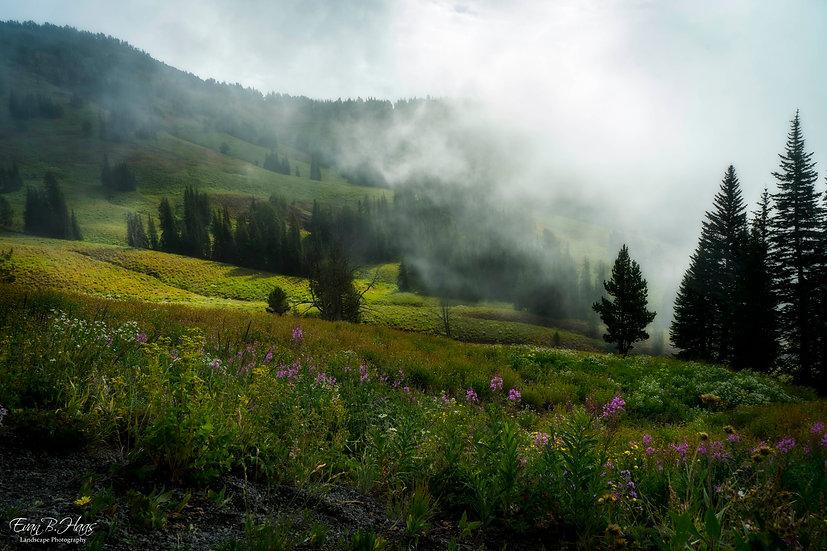 Yellowstone Meadow