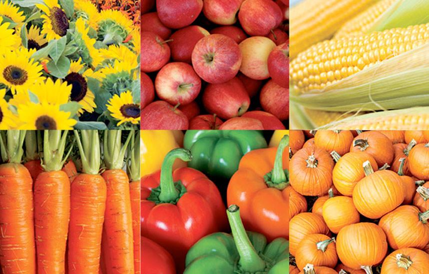 Fargo-Moorhead Farmers' Markets