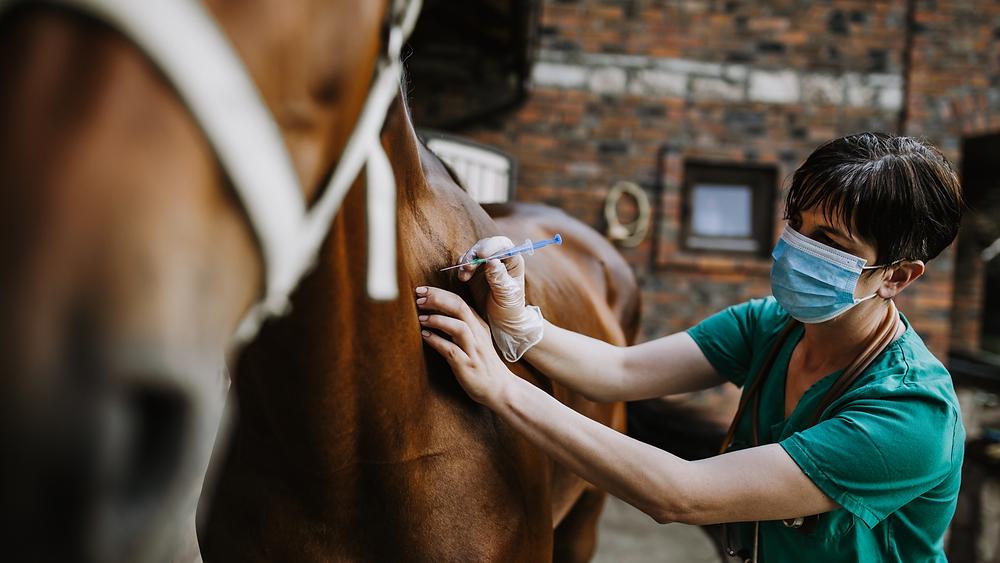 Assurance cheval vétérinaire demi-pension