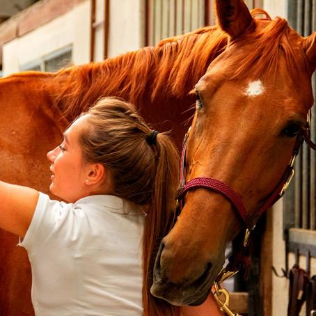 Quel niveau d'équitation faut-il pour avoir une demi-pension ?