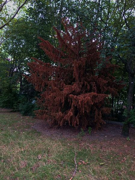 RedForestBerlin150819.jpg