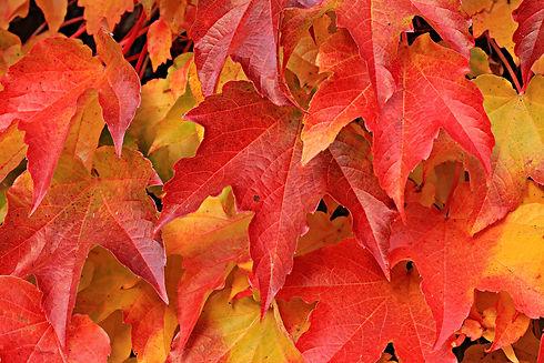 web leaves.jpg