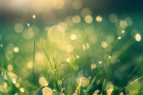 web grass.jpg