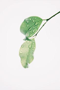 web leaf.jpg