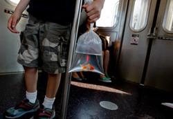 Train to JFK 2011