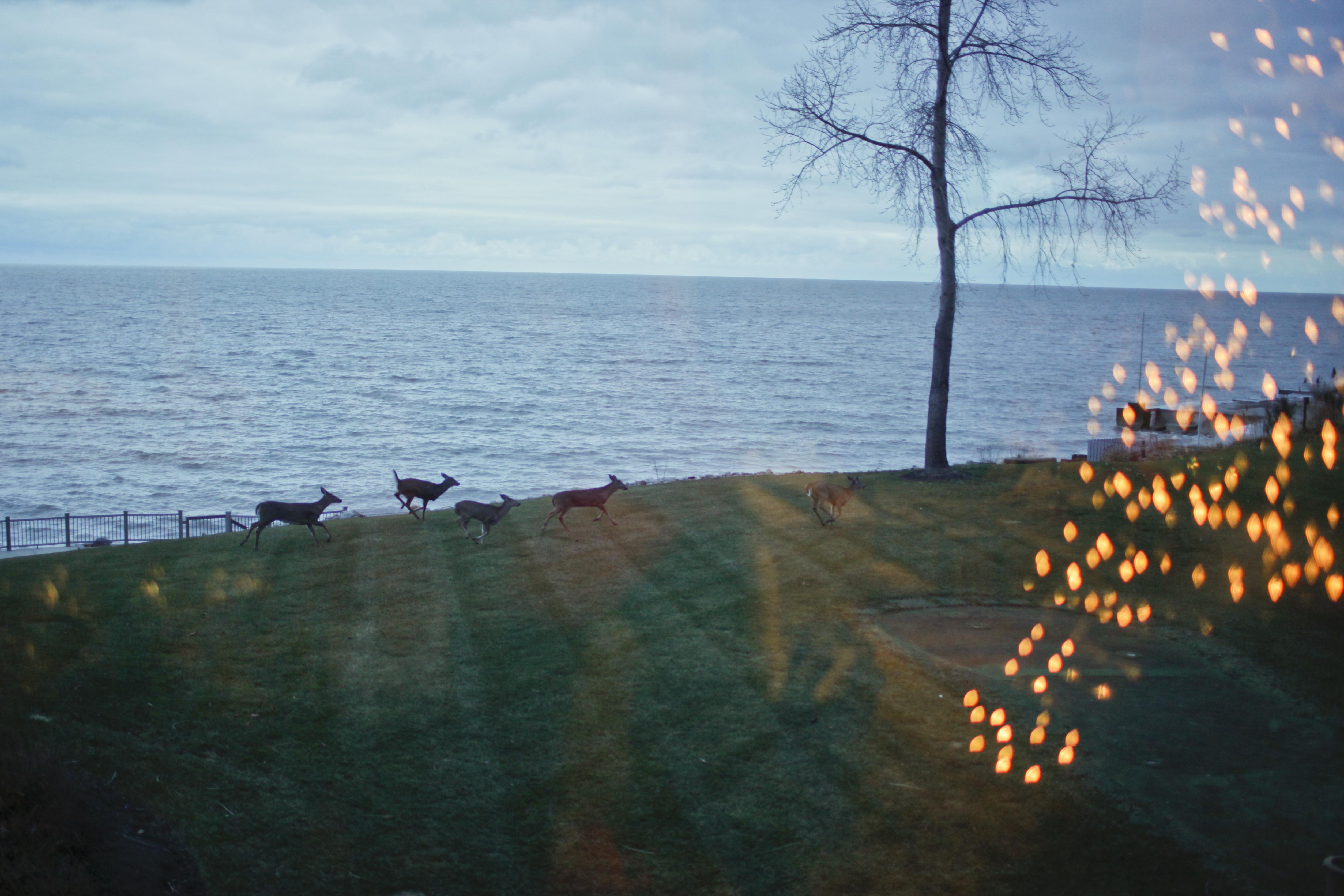 Lake Erie Xmas