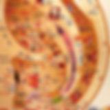 mapa auriculoterapia.jpg