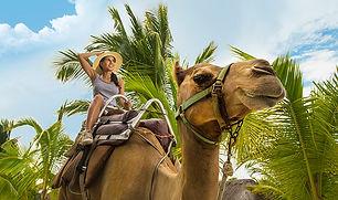 Camel-2017.jpg
