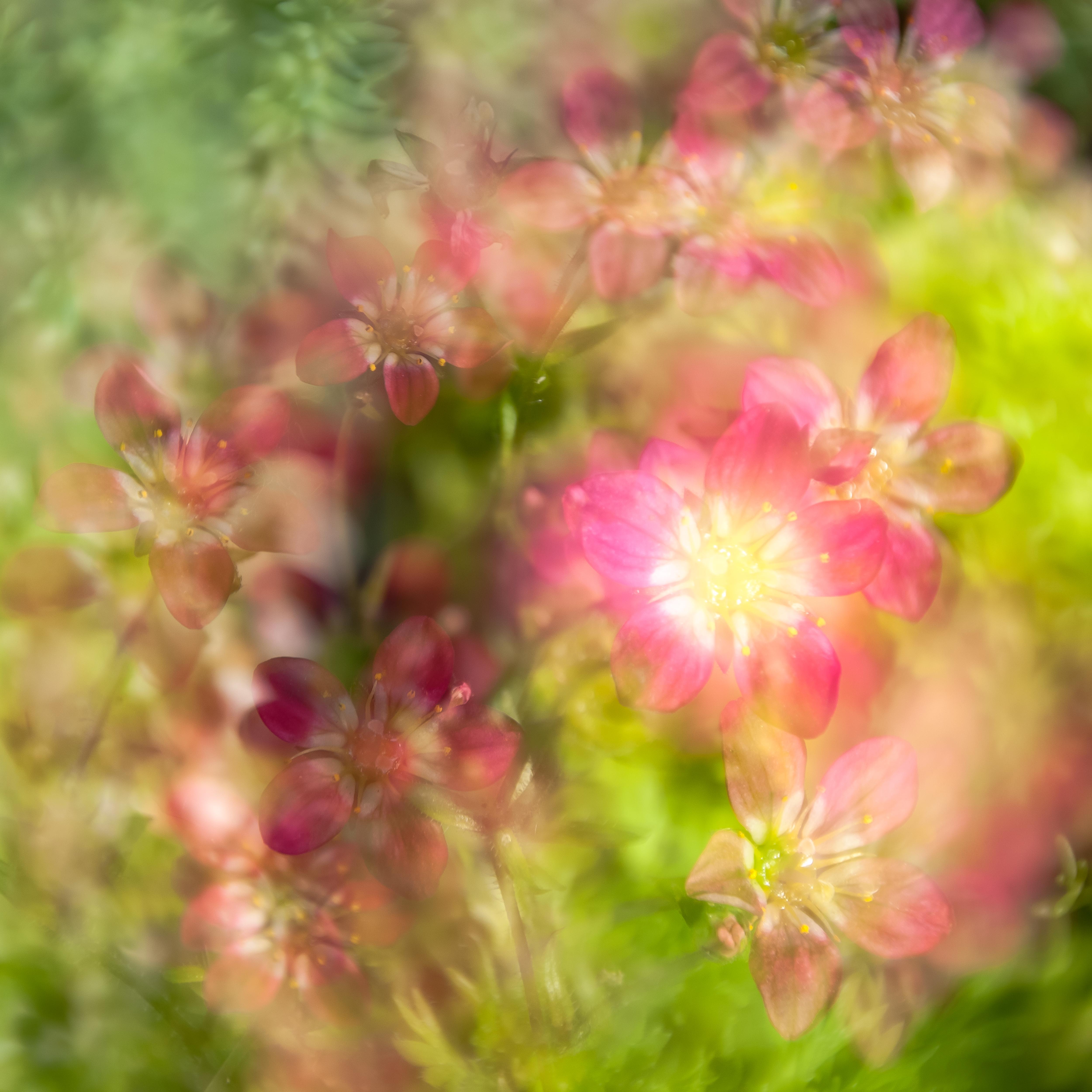 Fine Art Flowers 1