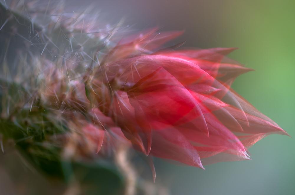 Fine Art Flowers- 6