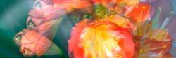 Fine Art Flowers- 5