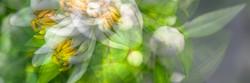 Fine Art Flowers- 7