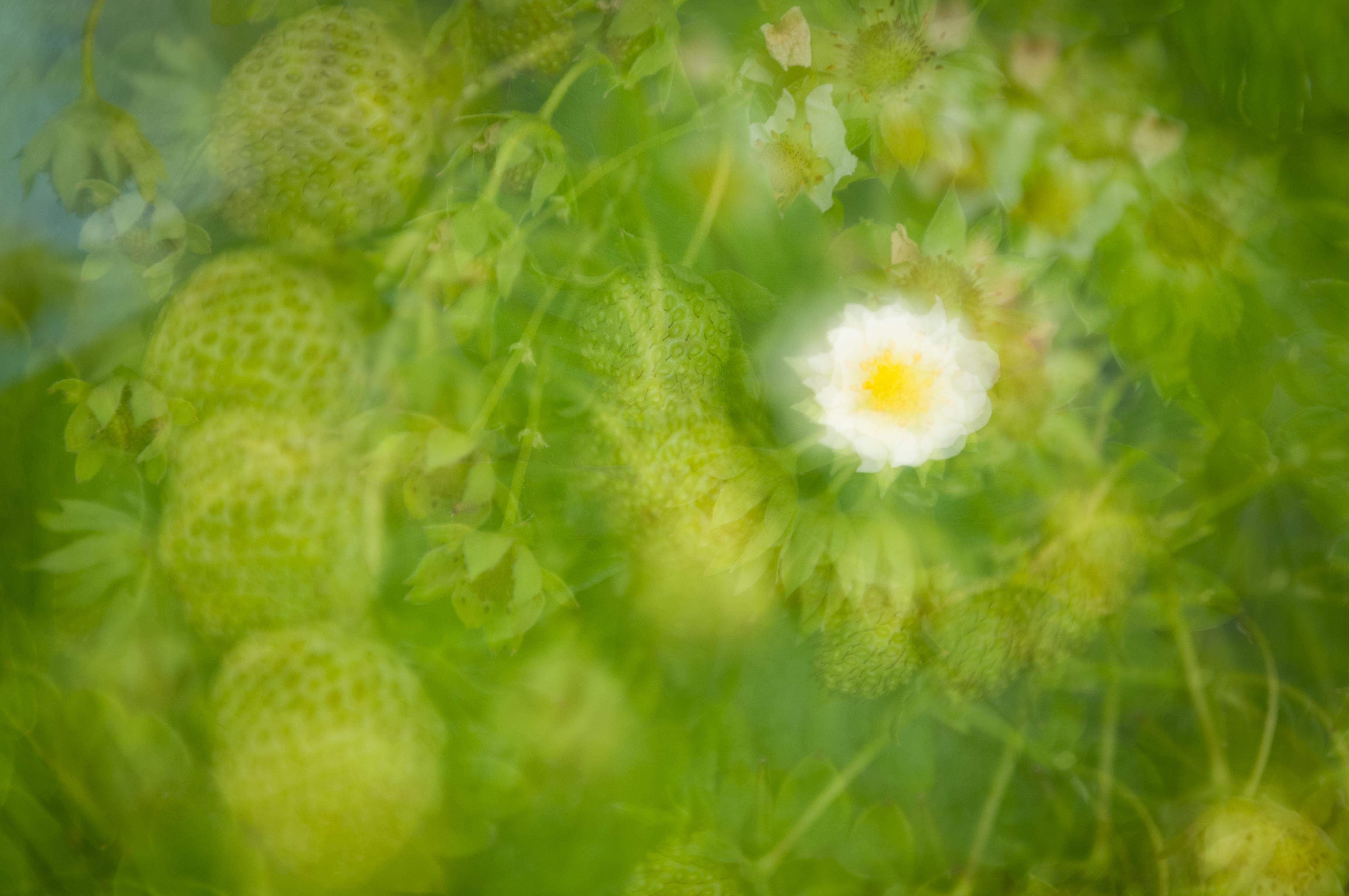 Fine Art Flowers 3