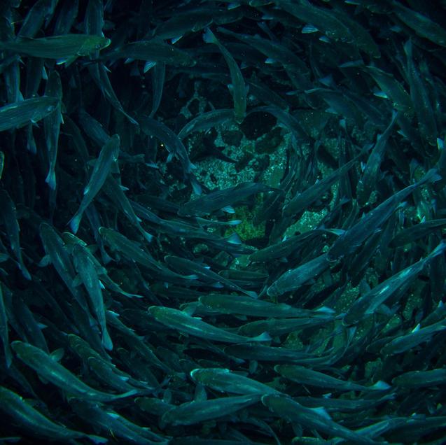 Fish-nado