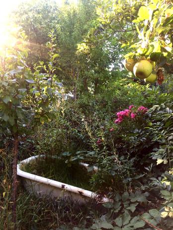 Wildes Gärtnern