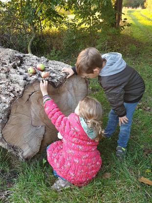 Wie alt ist der Baum?