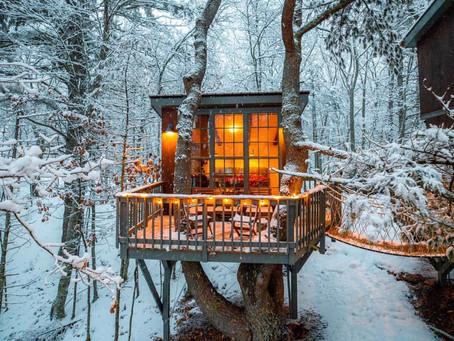 אפשר גם אחרת: לגור בבתי עץ בסביבה מיוערת