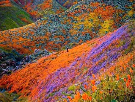 עמק הפרחים בהימאליה