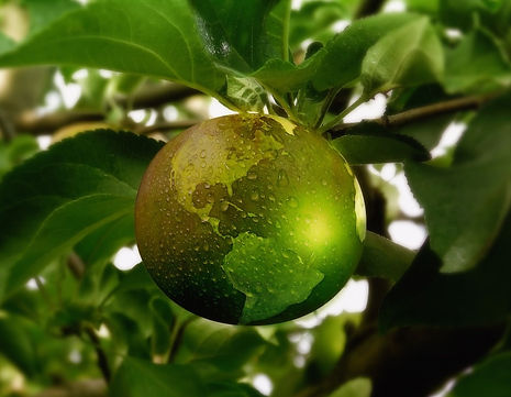 Green apple for Logo.jpg