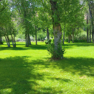 Campgrounds Back Area