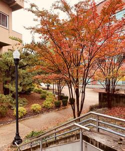 SOE Autumn Scene