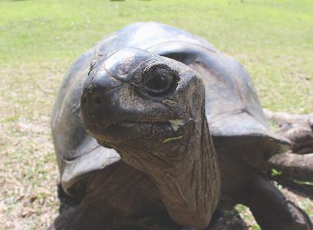 Curieuse - Insel der Riesenschildkröten