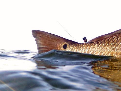 8x10 Print of Redfish and Angler2