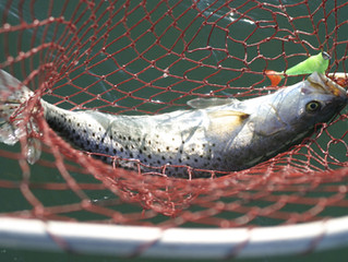 Winter Fishing Hot Along Texas Coast