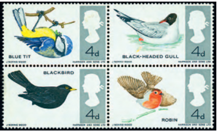 birds missing colour.png